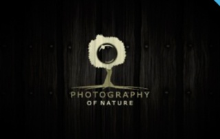 Top 100 - Logos de photographes