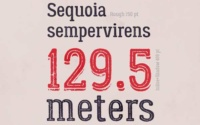 10 typographies gratuites à découvrir et à télécharger - Typo Lumberjack d'Alexey Kalinin